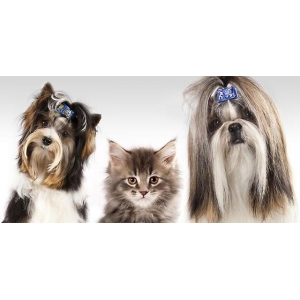 Стрижка кошек и собак недорого!