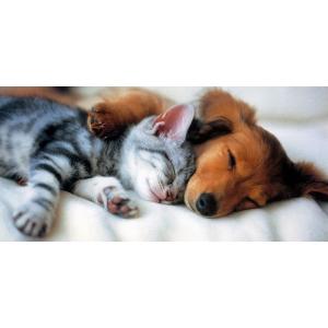 Ветеринария: Биокорректоры для здоровья всех животных